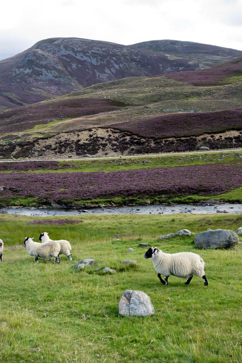 Schottland Luxus Reise - Natur Schottlands