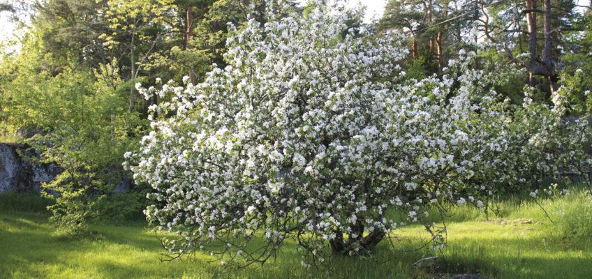 Segeln Schärengarten - Grinda Wärdshus Garten