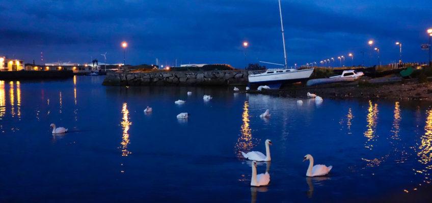 Luxus Reise Irland Schwäne Galway