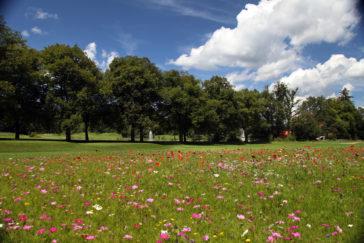 Golfen im GC München - Riedhof: Traumhafte Natur, bunte Frühlingswiesen und herausragend gepflegte Spielbahnen. Der Rundum - Service für Mitglieder ist im 5-Seen-Land einzigartig.