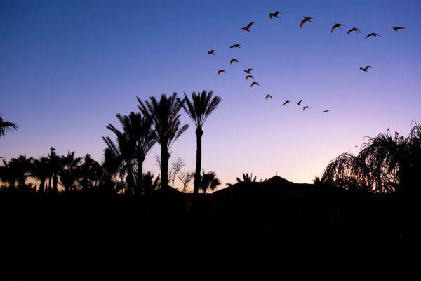 Vogelzug Palmeraie Resort