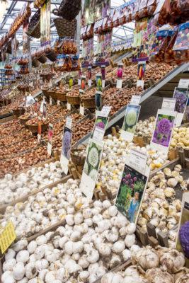 der traditionelle Tulpenmarkt richtet sich heutzutage vornehmlich an Touristen. Andererseits sind Tulpenzwiebeln, die dann im Frühling ein Farbenmeer erstrahlen lassen, auch wirklich ein originelles Mitbringsel